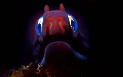 Colaboradora da Prospectiva conquista título mundial de fotografia subaquática